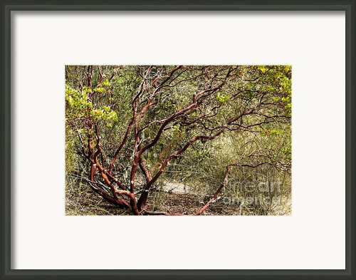 Tangled Up Framed Print By Suzanne Luft