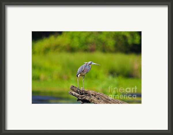 Tantalizing Tricolored Framed Print By Al Powell Photography Usa