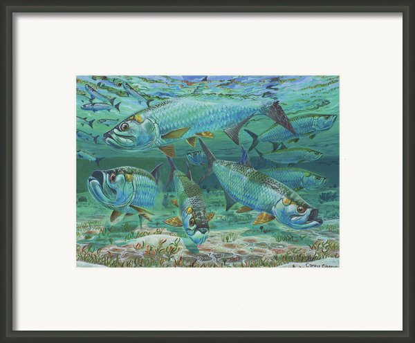 Tarpon Rolling In0025 Framed Print By Carey Chen