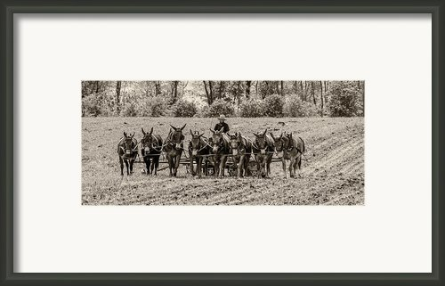 Team Of Eight Framed Print By Guy Whiteley
