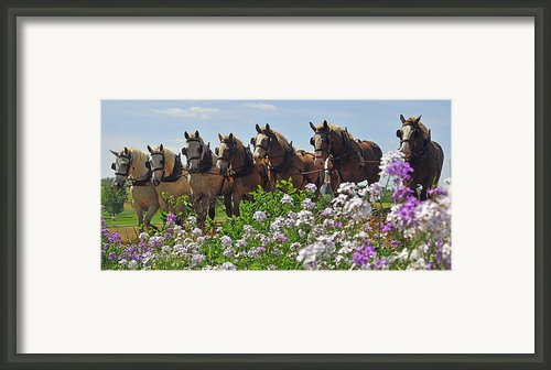 Teamwork Framed Print By Dan Myers