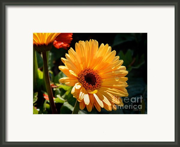 Tears For Daisy Framed Print By Nava Jo Thompson