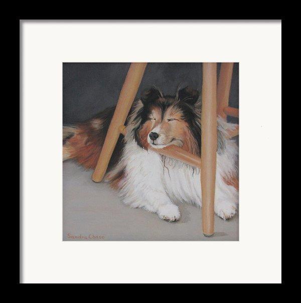 Teddy In My Studio Framed Print By Sandra Chase