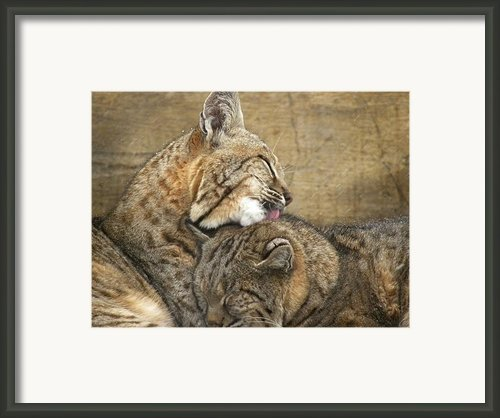 Tender Loving Care Framed Print By Teresa Schomig