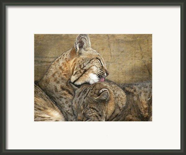 Tender Loving Care Framed Print By Teresa Schomig