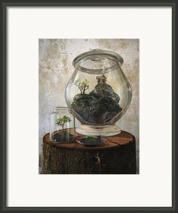 Terrarium Framed Print By Cynthia Decker