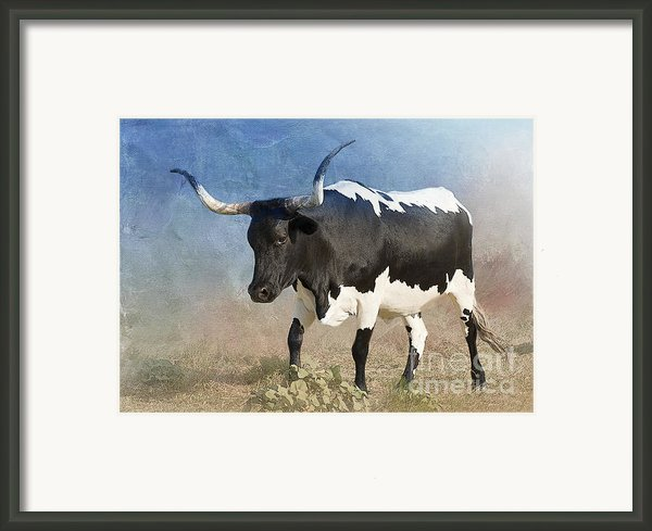 Texas Longhorn #7 Framed Print By Betty Larue