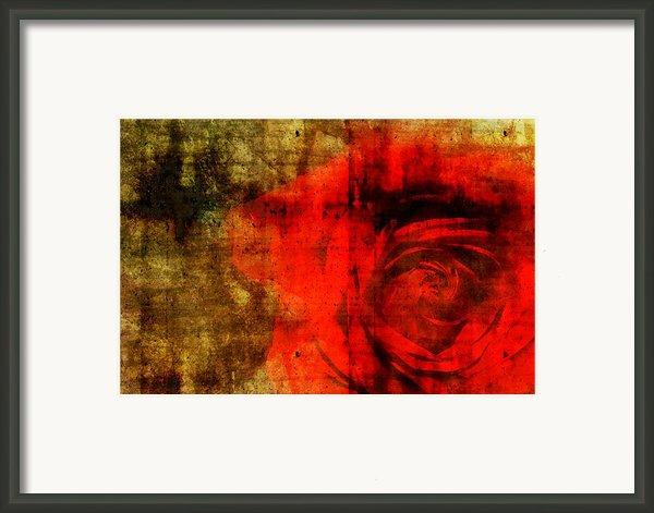 The Allure Of A Rose Framed Print By Brett Pfister