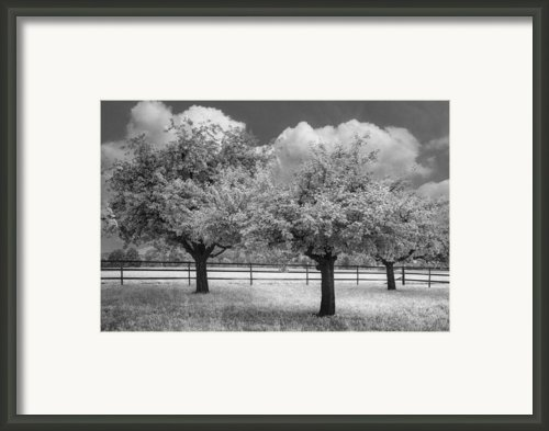 The Apple Orchard Framed Print By Debra And Dave Vanderlaan