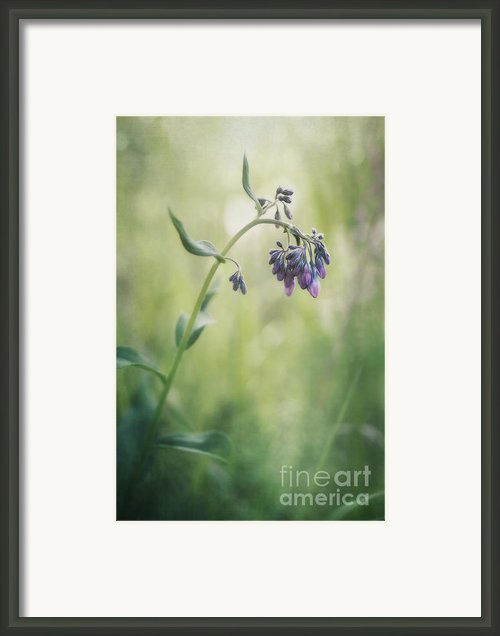 The Arrival Of Spring Framed Print By Priska Wettstein