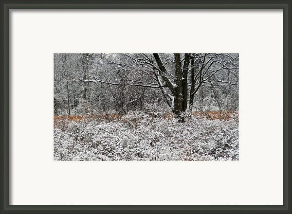 The Beauty Of Winter Framed Print By Aimee L Maher