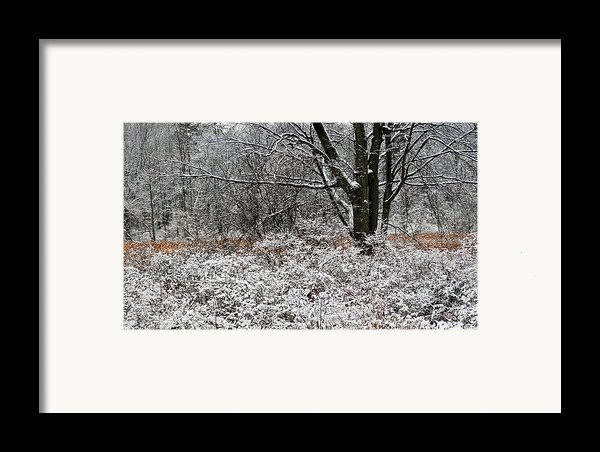 The Beauty Of Winter Framed Print By Aimee L Maher Photography And Art
