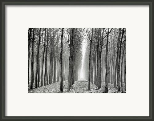 The Black-and-white Forest  Framed Print By Arie Arik Chen