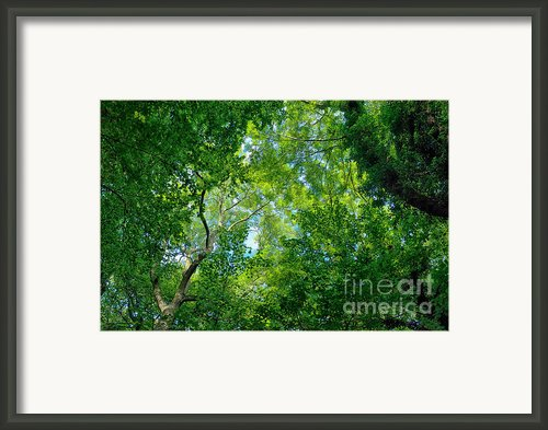 The Canopy Framed Print By Mark Johnson