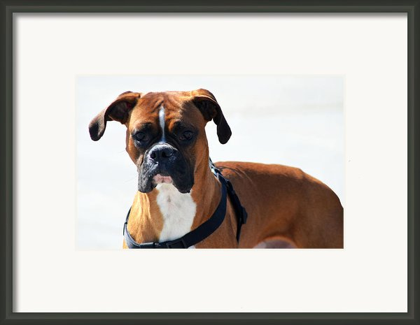 The Challenge Framed Print By Camille Lopez