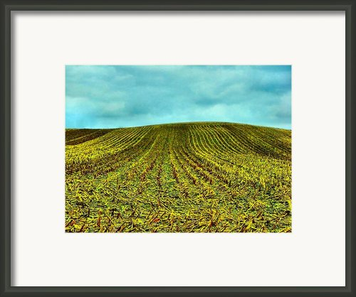 The Corn Rows Framed Print By Julie Dant