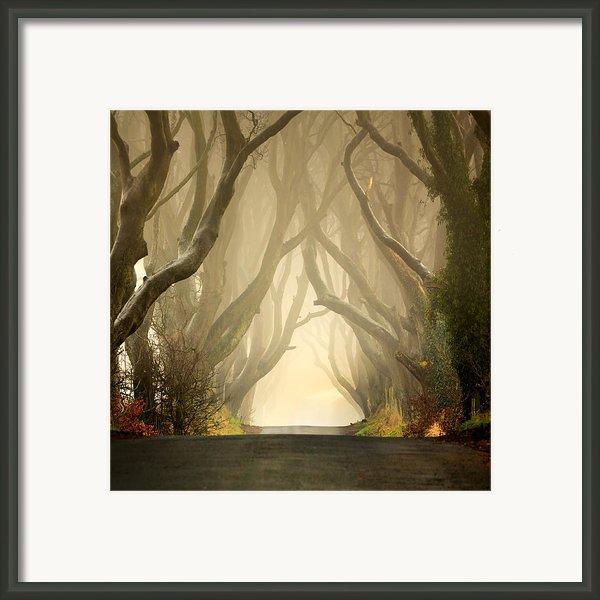 The Dark Hedges 2011 Framed Print By Pawel Klarecki
