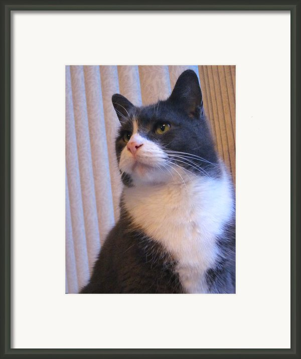 The Face Of Innocence Framed Print By Guy Ricketts