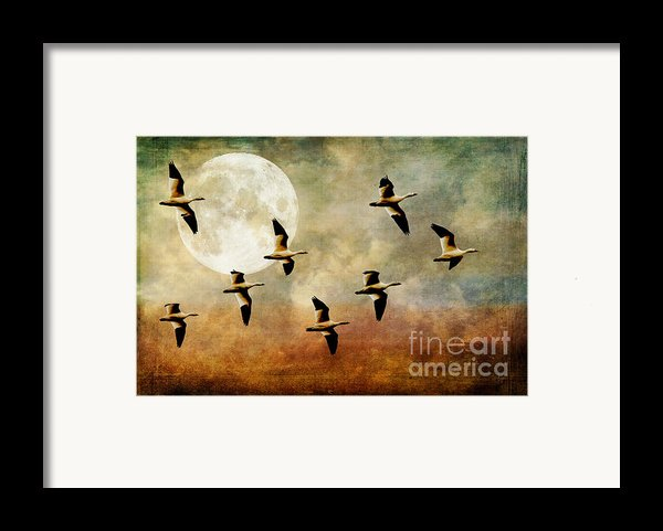The Flight Of The Snow Geese Framed Print By Lois Bryan