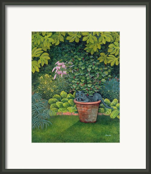 The Flower Pot Cat Framed Print By Ditz