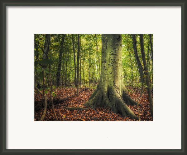 The Giving Tree Framed Print By Scott Norris