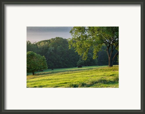 The Grazing Tree Framed Print By Bill  Wakeley