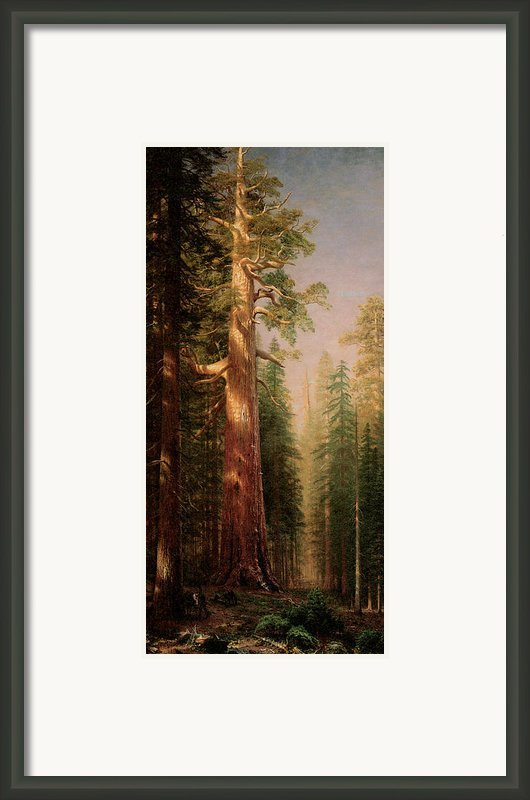 The Great Trees Mariposa Grove California Framed Print By Albert Bierstadt