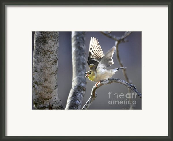 The High Notes Framed Print By Nava Jo Thompson