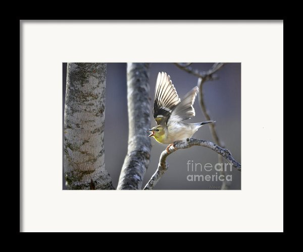 The High Notes Framed Print By Nava  Thompson