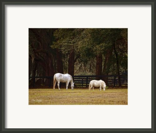 The Horse And The Pony - Standard Size Framed Print By Mary Machare