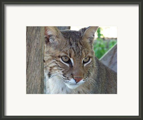 The Hunter Framed Print By Jennifer  King