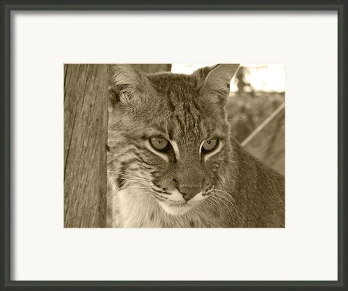 The Hunter - Sepia Framed Print By Jennifer  King