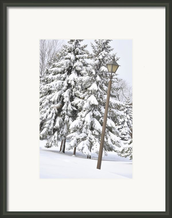 The Lamp And The Tree Framed Print By Frederico Borges