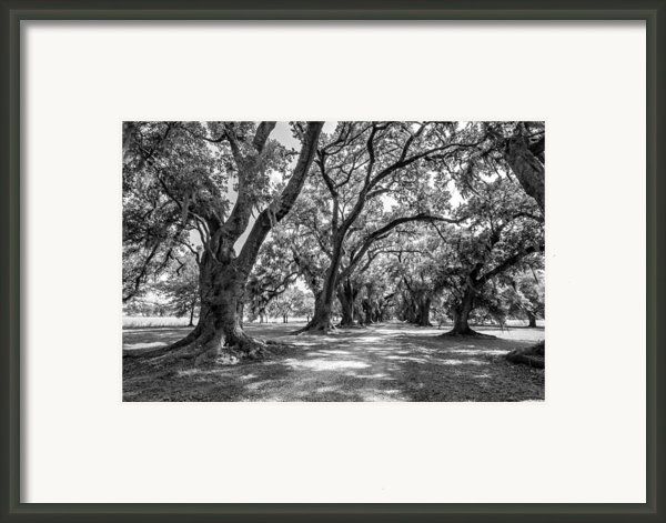The Lane Bw Framed Print By Steve Harrington