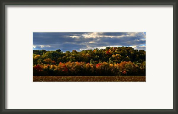 The Layers Of Autumn Framed Print By Julie Dant