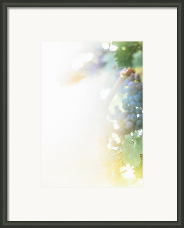 The Modern Grape 3 Framed Print By Clint Brewer