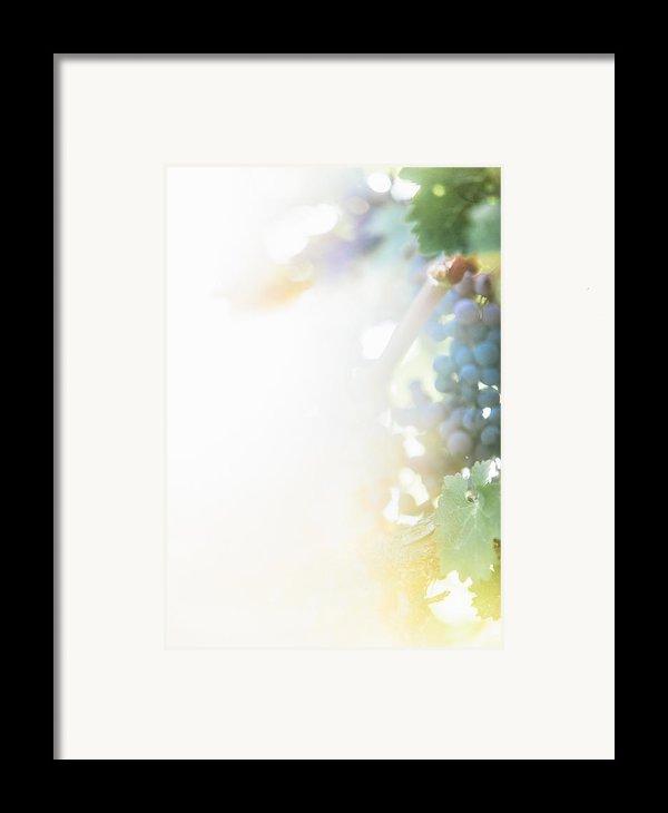 The Modern Grape 3 Framed Print By Clint Brewer