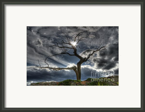 The Old Tree Framed Print By Bob Christopher