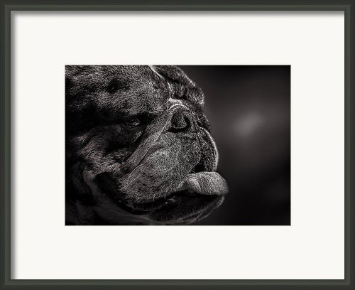 The Other Dog Next Door Framed Print By Bob Orsillo