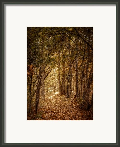 The Path Not Taken Framed Print By Scott Norris