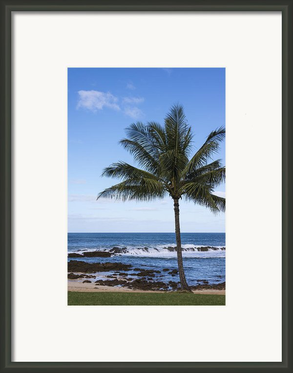 The Perfect Palm Tree - Sunset Beach Oahu Hawaii Framed Print By Brian Harig