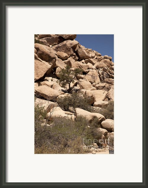 The Pile Is Home Framed Print By Amanda Barcon