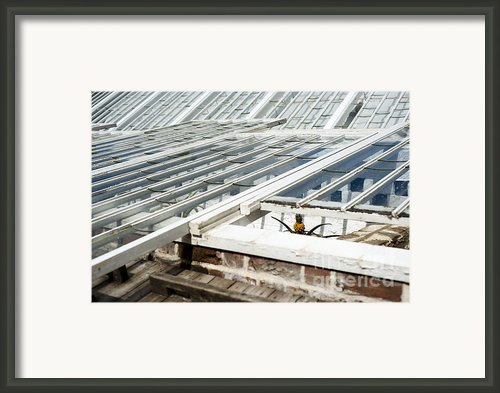 The Pineapple Pit Framed Print By Anne Gilbert