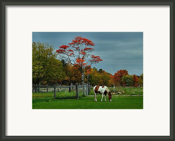 The Pinto Framed Print By Julie Dant