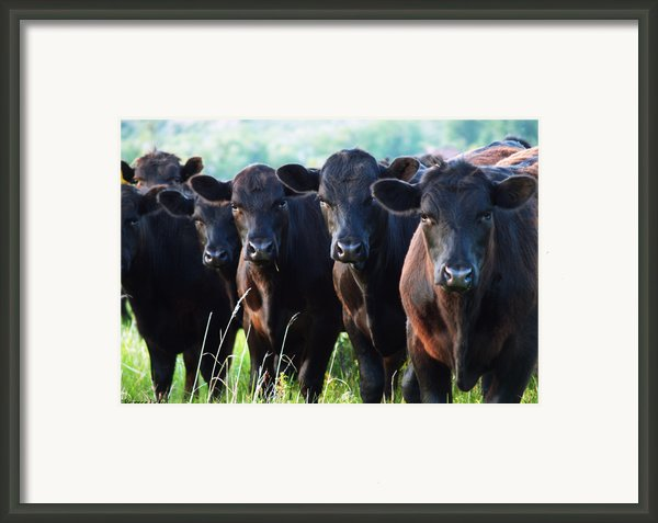 The Posers Framed Print By Rebecca Pickrel