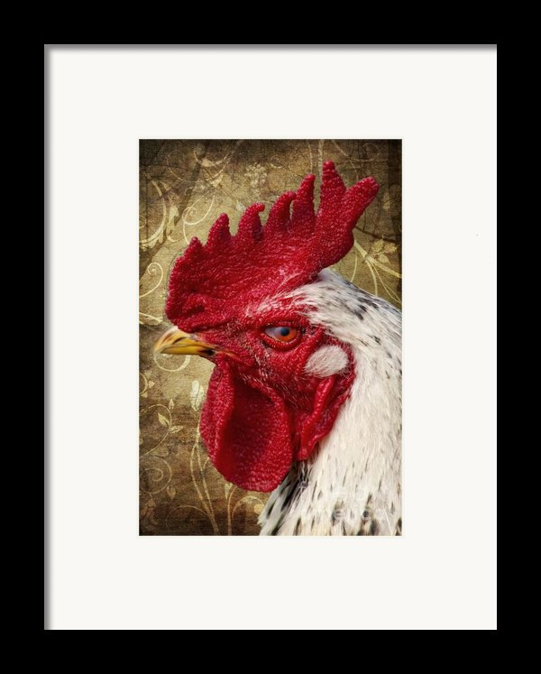 The Rooster Framed Print By Angela Doelling Ad Design Photo And Photoart