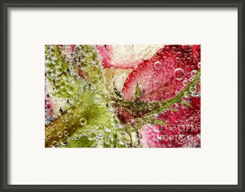 The Rose Framed Print By Mark Johnson