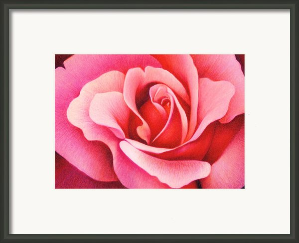 The Rose Framed Print By Natasha Denger