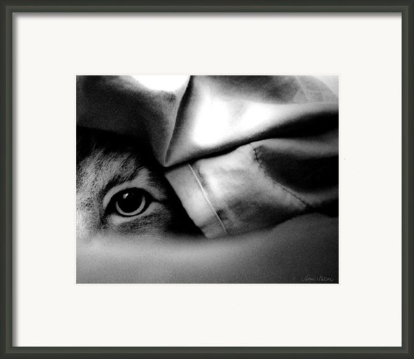 The Spy Framed Print By Sabine Stetson