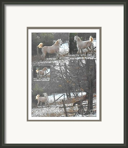 The Stallion Lives In The Country Framed Print By Patricia Keller